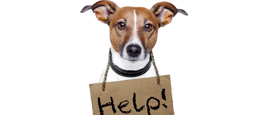 dog-help