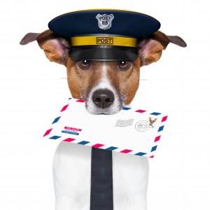 contact gedragstherapuet honden coach