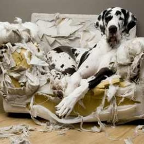vernielgedrag-honden